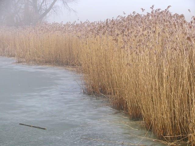 Across a Frozen Pondby James B. Nicola